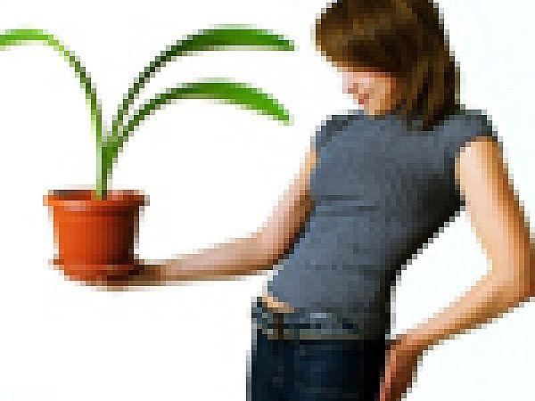 Освещение в жизни комнатных растений
