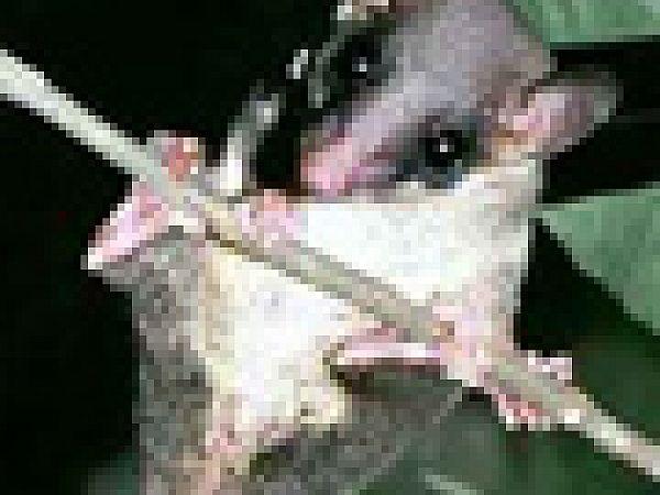 Ученые обнаружили животных-алкоголиков