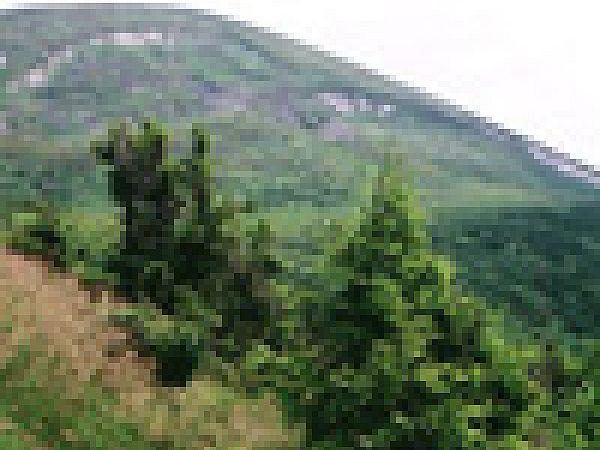 Экологи: Вырубка карпатских лесов грозит новыми бедствиями