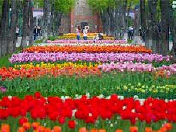 Волшебные майские праздники: куда отправится?